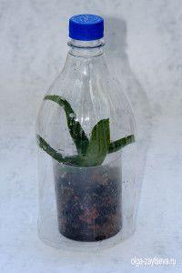 Тепличка для орхидеи