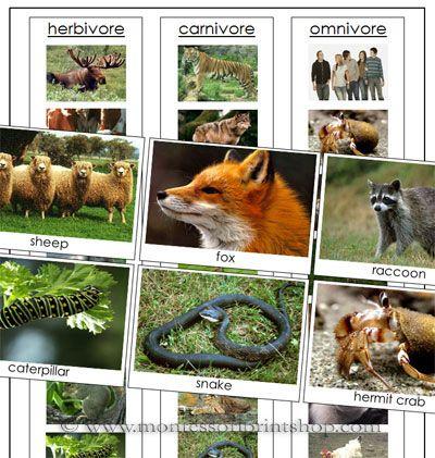45 Best Herbivores Carnivoresomnivores Images On Pinterest Life