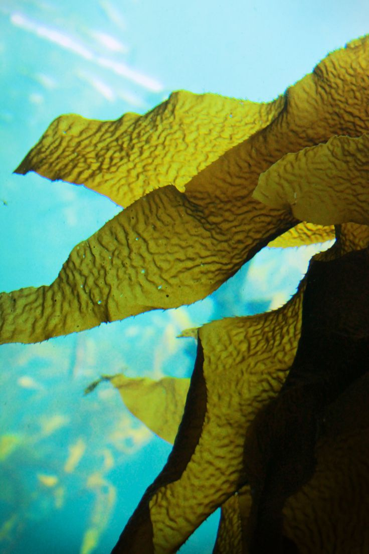 Seaweed. . .