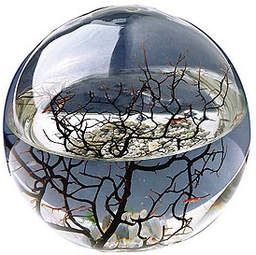 Ecosystem: Stuff, Glasses, Shrimp, Gifts, Crystals Ball, Blog Ideas, Small, Products, Ideas Decorativa