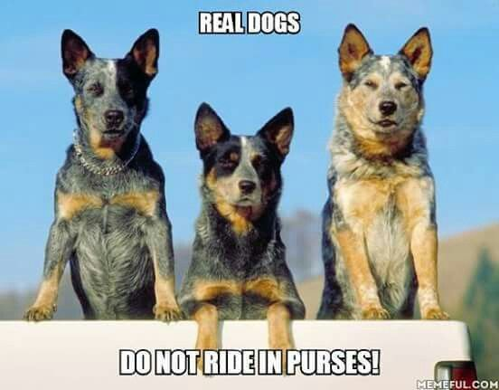 Real Dogs Do Not Ride In Purses!