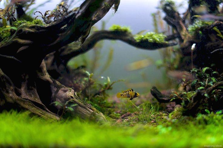 693 best underwater botanic images on pinterest aquarium for Aquarium botanic