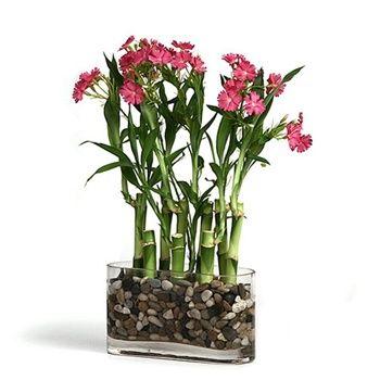 Lucky Bamboo Arrangement - Silk Flower Accents