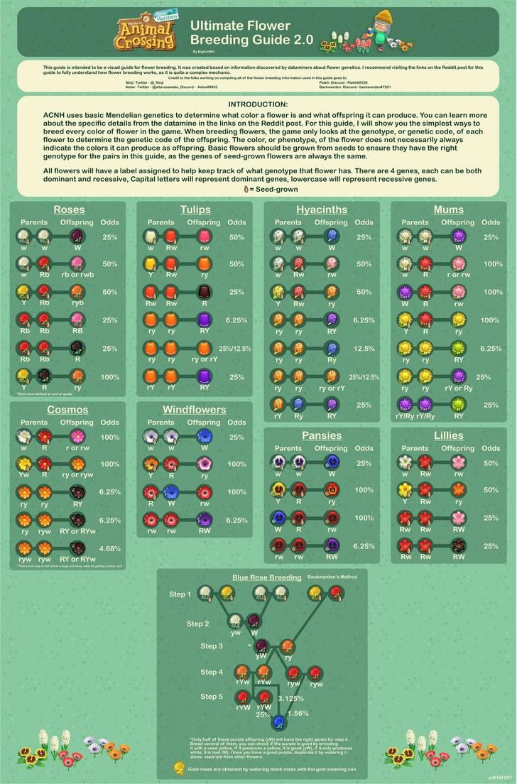 Animal Crossing New Horizons Hybrid Flowers Guide How
