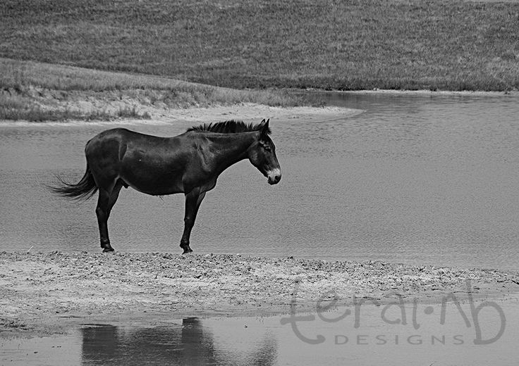 A personal favorite from my Etsy shop https://www.etsy.com/listing/202606301/black-horse-photo-black-and-white