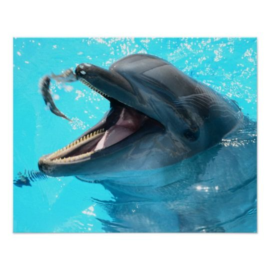Dolphin Poster  – Dolphins