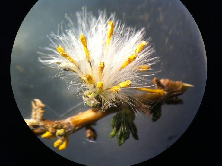 Centro de Investigación del Hombre del Desierto CIHDE Analizó Plantas   Medicinales del Altiplano en Universidad de Inglaterra