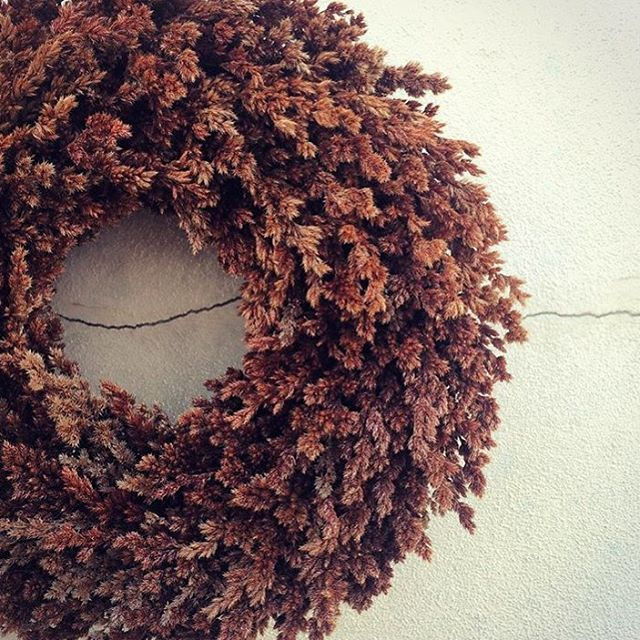 Velvet Rush|Meeboldina scariosa. A beautiful native rush, which I can just imagine growing on mass, with the wind flowing though its velvety texture and beautiful shades of brown. Using just one type of material...my favourite way to wreath. Lish X  #wreaths #velvetrush #meeboldinascariosa #natural #sustainabledecor #decor #brown #vegan #vegandecor #vegancommunity #lisschelemasters #instadaily #instagood #instagram #perth #australia