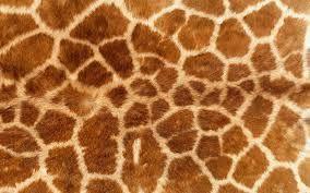 textuur van dieren - Google zoeken