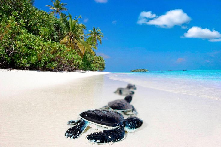 https://flic.kr/p/7zUT5b | Truth óƒ Beauty.....•º㋡´ Explored » | Where you can spend lovely moments with fun and enjoyment in the beautiful pure white beaches. (Maldives) <b>Who agree of my statment,  Is this Place Beautiful</b>
