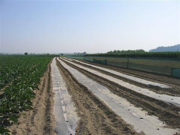 Un telo biodegradabile e compostabile su un campo di zucchine