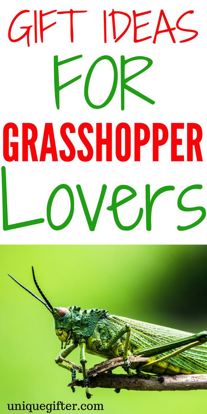 Gift Ideas for Grasshopper Lovers   What to get someone who likes grasshoppers   Fun birthday gifts for insect lovers   STEM gifts for adults   Creative critter Christmas gifts   Grasshopper accessories   Grasshopper decor