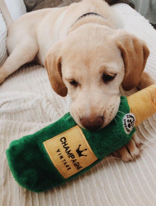 Vsco Fatmoodz Dog Selfie Shar Pei Puppies Puppies