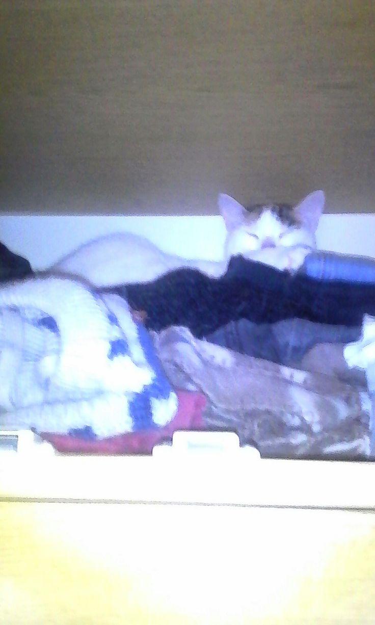 Freja w szafie
