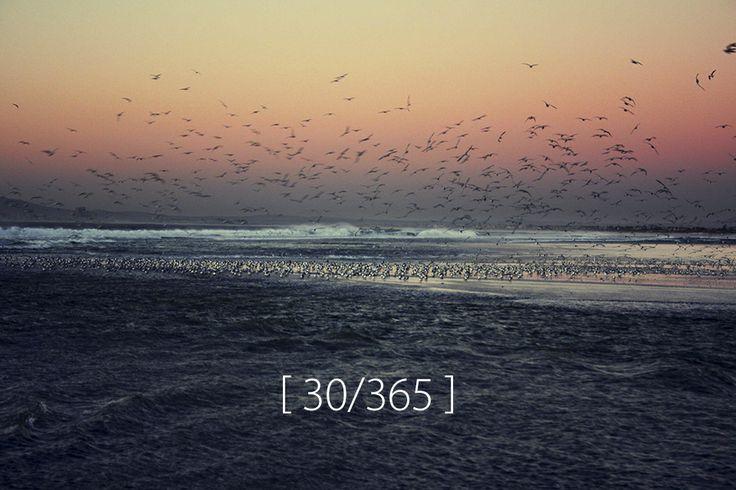Wednesday, 29 Jan 2014 [ Birds of a feather, Milnerton Lagoon ]