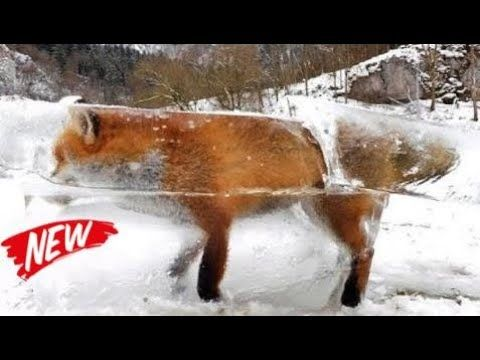 "Top 10 Animals Frozen In Time - DAY 47 Top 10 Animals Frozen In Time - DAY 47 Top 10 Animals Frozen In Time - DAY 47 You want facts? You want watch them everyday?. Well you're in the right place. Laughing Out Loud brings you an unholy number of facts of varying quality about the topics you might like! Movies gaming social media aliens countries. Whatever topics we can find india facts top 10 list top 10 facts... Facts for we'll consider making a video about. ""Laughing Out Loud"" channel is…"