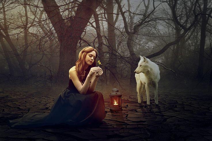 늑대, 여자, 판타지, 숲, 동화