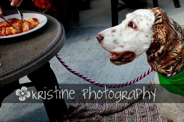 Best Western Carmel Dog Friendly