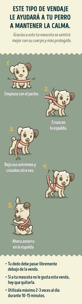 Este vendaje ayuda cuando tu perro tiene miedo a ruidos fuertes, como truenos, explociones, fuegos artificiales, entre otros