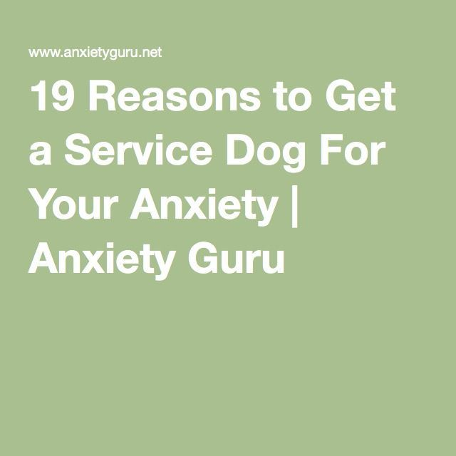 Reasons To Get A Service Dog For Anxiety