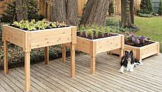Raised Garden Beds - article about the benefits, where to buy them or how to build them, etc.
