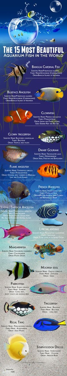 Pet Fish Stuff... The 15 most beautiful aquarium fish in the world Infographic ~ Salt water tanks.