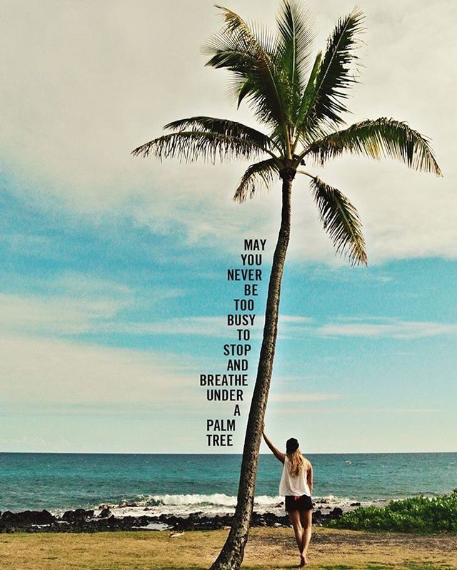 GoodMorning 🌴 | Me | Palm tree quotes, Beach quotes, Tree ...
