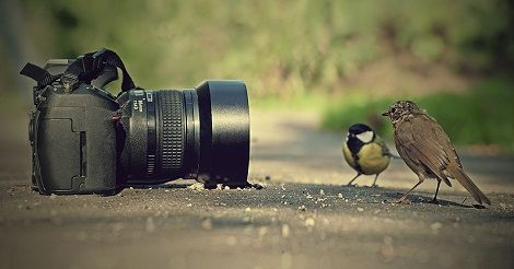 Best Photography tips, photography blogs and photography techniques #PhotographyTips #PhotographyBlogs #PhotographyTricks #WeddingPhotographer http://bloggerz.co.in/category/photography/