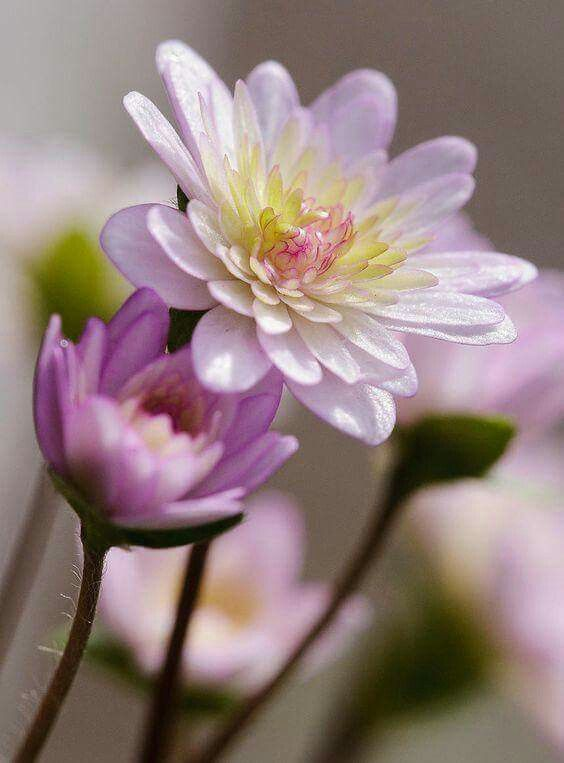 http://www.cassiaflorist.com/p/toko-bunga-di-jakamulya-cassia-florist.html