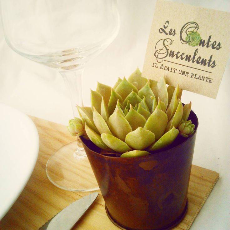 Cadeaux aux invités personnalisés - Mini plantes grasses - Mariage, baptême, anniversaire...