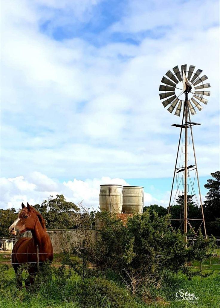 Pin on Windmills