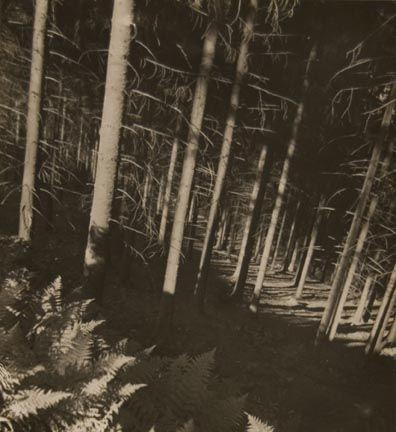 Untitled (trees) Ehm, Josef 1936