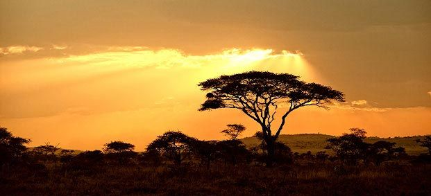 mainpic_african_hunting_safaris