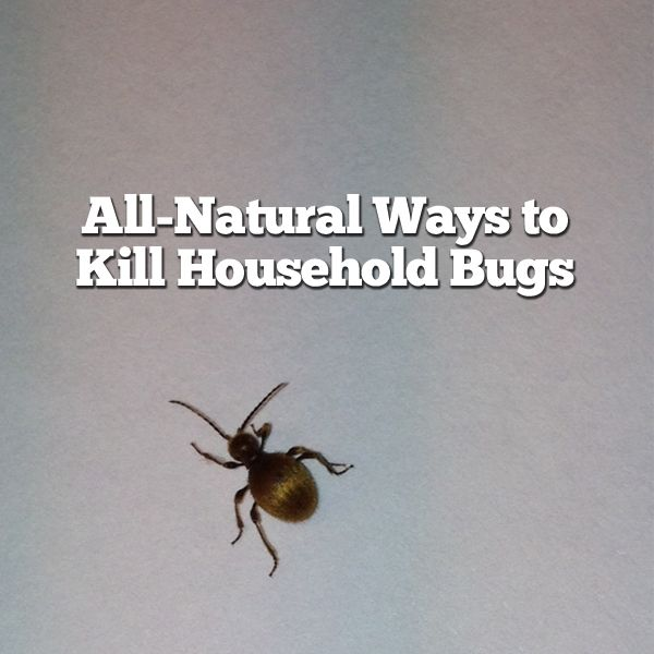 Herbs and essential oils-to kill household bugs