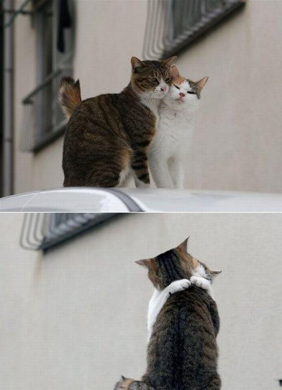 Romantic Felines