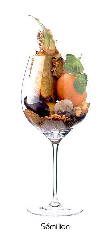 SEMILLON - Ananas, agrumes, menthe fraîche, champignon de Paris, abricot confit, coing, poire, noisette, cire d'abeille, pêche blanche, fleur d'acacia, amande...