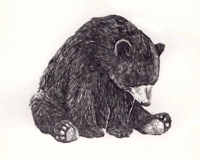 awesome bear illustration