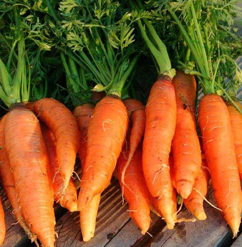 Chantenay Red Core Carrots