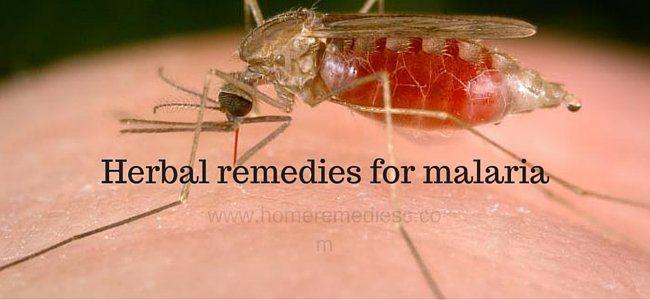 Herbal remedies for malaria