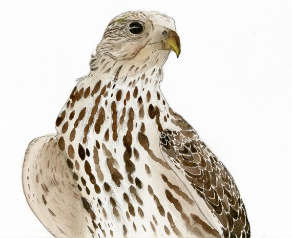 the peregrine falcon essay Chicks of some species, such as peregrine falcon, grow very fast they double  their birth weight after 6 days and increase it tenfold by the age of 3 weeks  young.