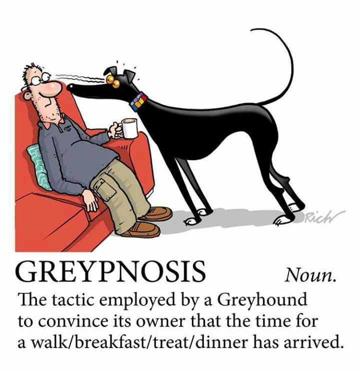 """So true. My Italian Greyhound has this specific look that says, """"Move my bed over THERE!"""""""