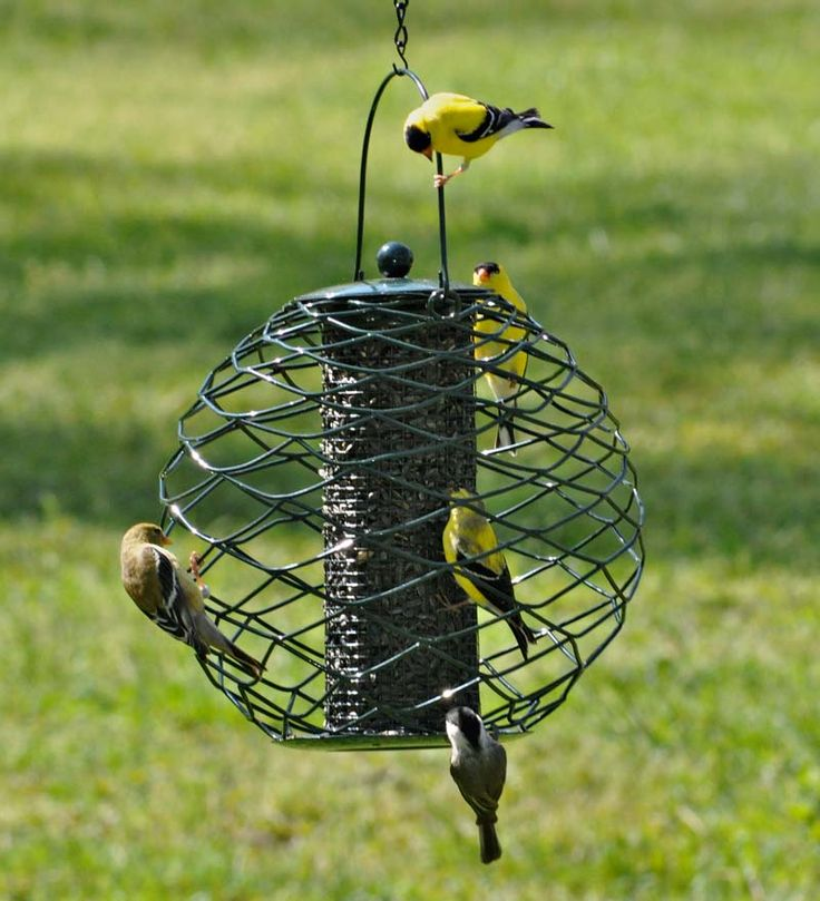 Globe Thistle Seed Bird Feeder for finches and other songbirds.