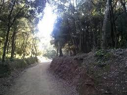 Envidia de bosque mediterráneo. Es nuestra decisión que este paisaje vuelva a aparecer junto al Ebro