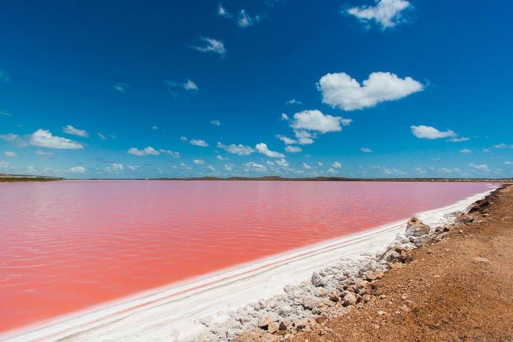 Hutt Lagoon - the pink lake found between Geraldton and Kalbarri on the Scenic Coastal Drive