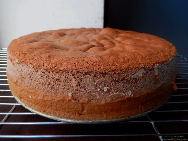 Blat de tort cu cacao.  Cocoa sponge cake.