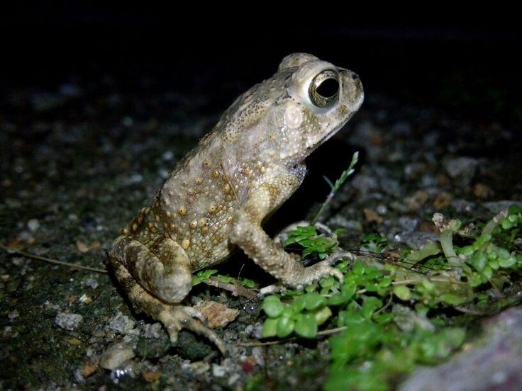 Frog by. ian barutu
