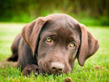 Yavru Köpeğiniz İçin Erken Dönemde Eğitim http://em-pati.net/yavru-kopeginiz-icin-erken-donemde-egitim/