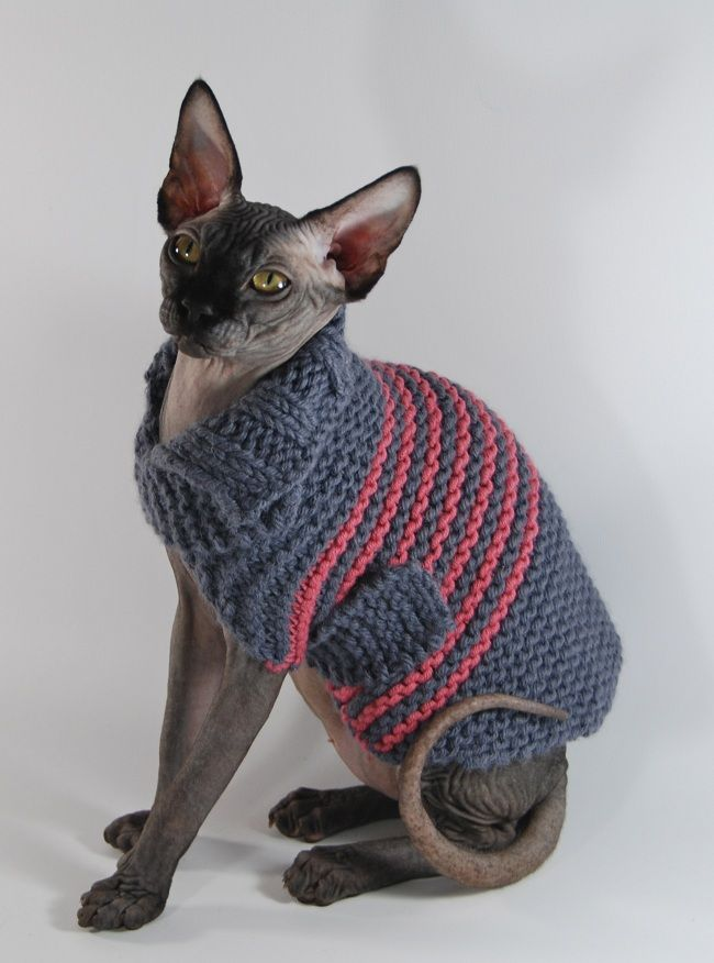 Pics For Hairless Cats In Sweaters Cat Sphinx Cat Cat