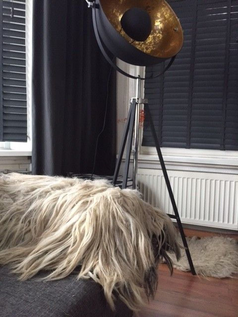 Gevilte schapenvacht decoratie stuk,  klikt u op de foto,s om ze scherp in groot formaat te zien  mooi stuk vilt vacht gemaakt van een vacht van het heidschnucke schaap , een vacht met blonde kleuren en iets grijs,  met hele mooie lange lokken die helaas uitharen wat normaal is bij dit ras, de oorzaak hiervan is dat deze vachten onderwol hebben en boven haren.  heeft een afmeting van: 70 bij 90 cm in een vierkante vorm  Prachtig kleed geschikt voor decoratie over de bank . De schapen wonen…