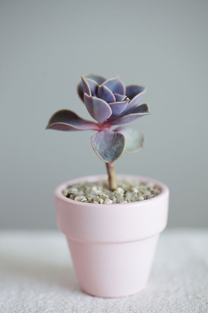adorable succulent // via Plant Hunting tumblr